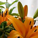 Orange Lillies  by Margaret Stanton
