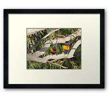 Cheeky Colourful Rainbow Lorikeets Framed Print