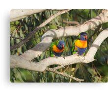 Cheeky Colourful Rainbow Lorikeets Canvas Print