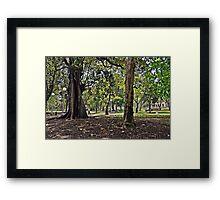 Hyde Park, Sydney Framed Print