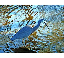 """BLUE CRANE"" Photographic Print"