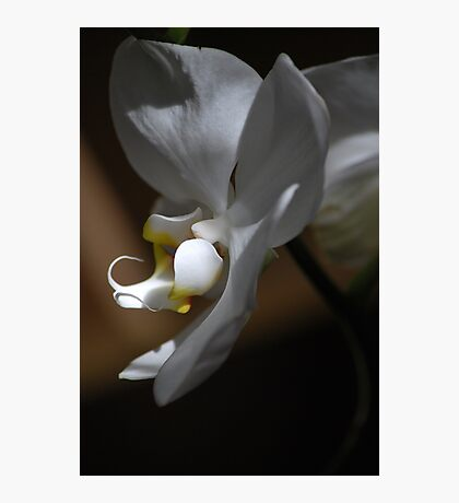 Orchid Notes Photographic Print
