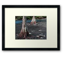 Cypress Trees.... Framed Print