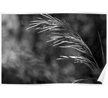 Wild, Tall Grass Poster