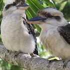 Laughing Kookaburras by Marilyn Harris