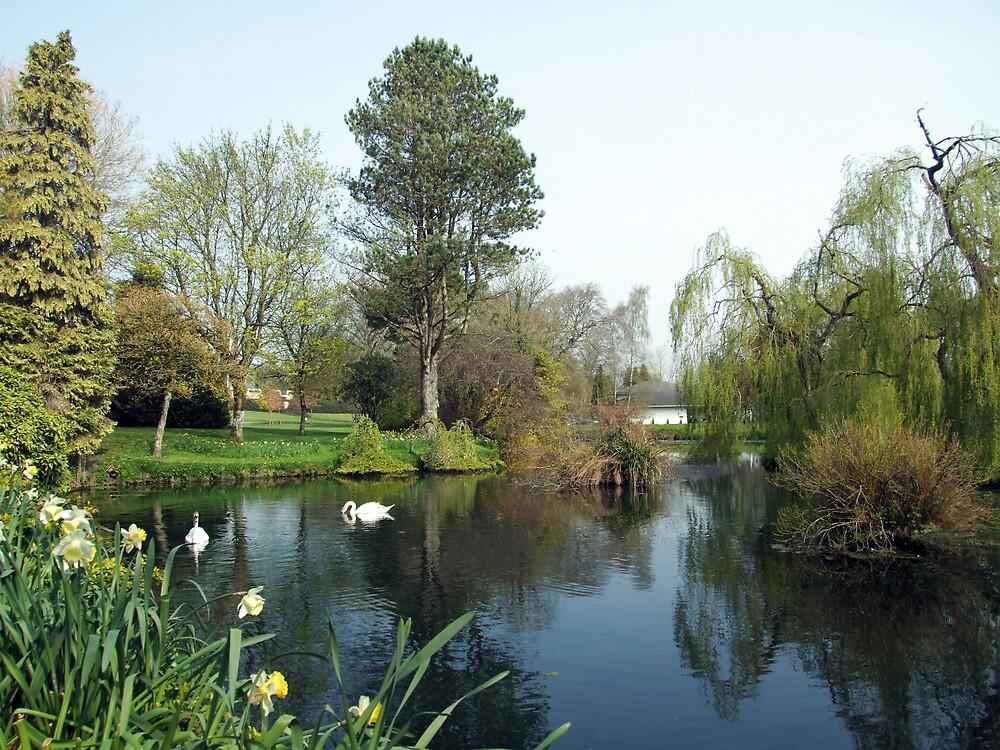 Japenese Gardens pond by John Quinn