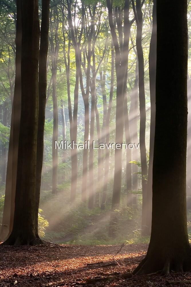 Sun rays in misty morning by Mikhail Lavrenov