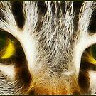 Tigress eyes by Lior Goldenberg