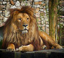Lion by DariaElena