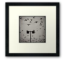 Revenge of the Birds Framed Print