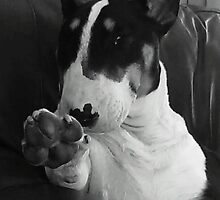 English Bull Terrier by zowenia1234