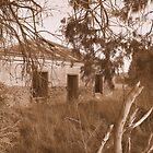 A Home Among the Gumtrees ... by Trish Meyer