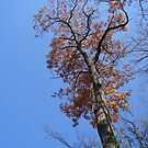 The Mighty Oak by Marmadas
