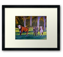 My Cows Framed Print