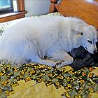 """Sylvie """"Naps on Her Own Blanket"""" © 2008 by Jack McCabe"""