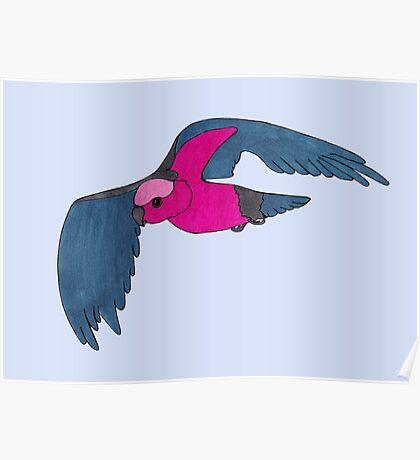 Galah in flight Poster