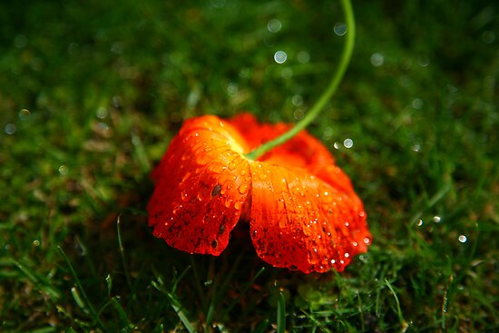 Water Droplet Petals by Erland Howden