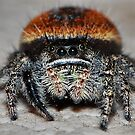 Jumping Spider by BluAlien