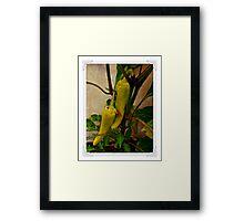 #capsicum Framed Print