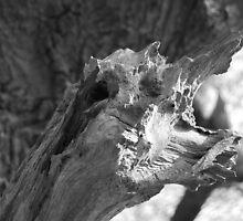 Half man-tree, half lizard...gnarly by KittenBoy