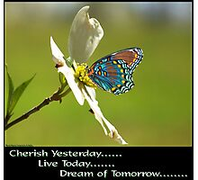 Cherish Live Dream Photographic Print