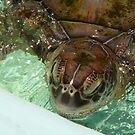 Meet Turtle by Jessie Harris