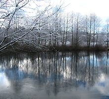 Snowy Sammamish Slough  by pinklilypress