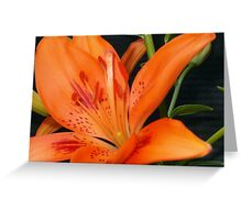 Orange Lilly of the Valley Greeting Card