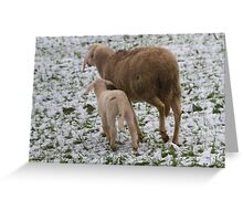 sheep and lambs in the snow Greeting Card