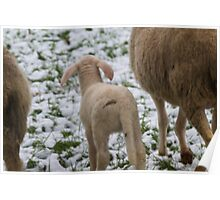 sheep and lambs in the snow Poster