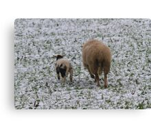 sheep and lambs in the snow Canvas Print
