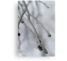 frozen dew on the branches Metal Print