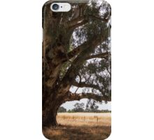 The big tree at the corner of the block iPhone Case/Skin