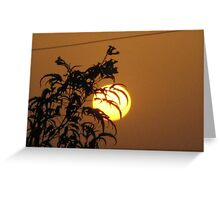 Tree and the sun Greeting Card