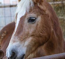 horse in the farm by spetenfia