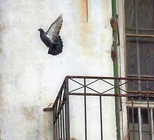 Freedom by SuddenJim