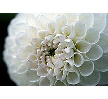 Dahlia in white Photographic Print