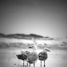 Seagulls by Josie Mackerras