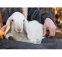 lamb with shepherd Photographic Print