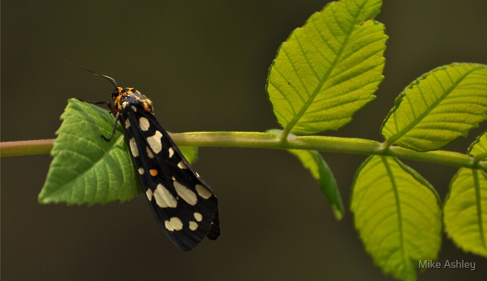 Black and White Bug on a Leaf by Christian Eccleston