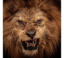 Snarling Lion Photographic Print