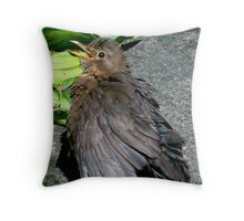 Hayley the half-tame blackie Throw Pillow