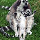 A family of Lemurs by Stuart Woodcock