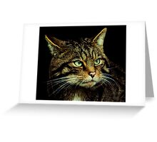 Scottish Wildcat close up Greeting Card