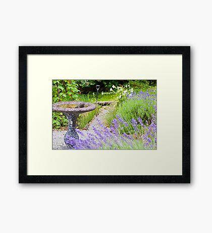 Frog in the Garden Framed Print