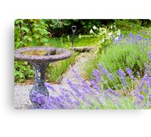 Frog in the Garden Canvas Print