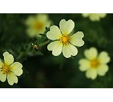 Buttercups? Photographic Print