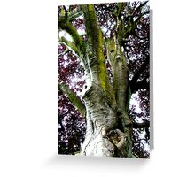 Looking up the Elephant Tree (Copper Beech) Greeting Card