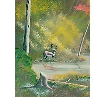 Deep Woods - Buck in the woods - Acrylic Paint on Canvas Photographic Print