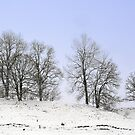 Bare trees in the snow by Arie Koene